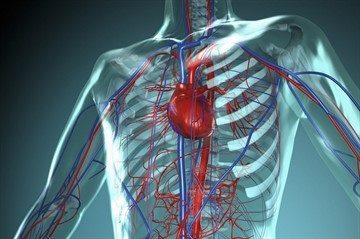 Влияет ли стоматологическая анестезия на сердце?