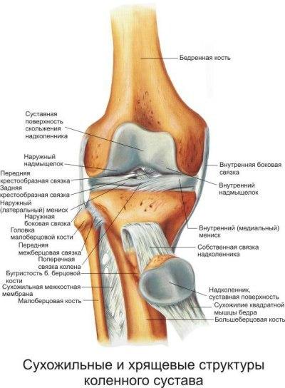 Болят колени: что делать, причины боли в колене при сгибании, при ходьбе