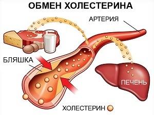 Питание при повышенном холестерине: диета, как понизить холестерин в крови, запрещенные продукты