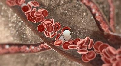 В чем причина понижения лейкоцитов, потери веса и периодических головокружений?