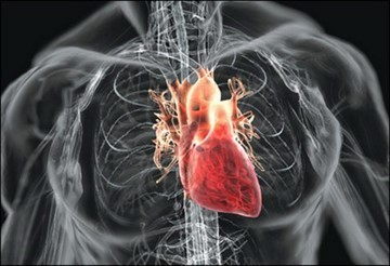 Диабетическая кардиомиопатия при сахарном диабете 1, 2 типа: симптомы, лечение